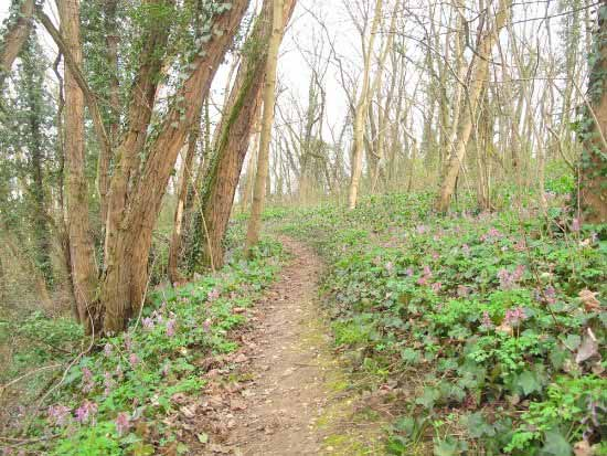 A forest with a walking trail